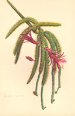 Botany - Vegetable - Plants and Flowers - Succulent - Cactus (6)