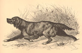Fishing and Hunting - Album de la Chasse Illustree - Hunting dog - Gundog