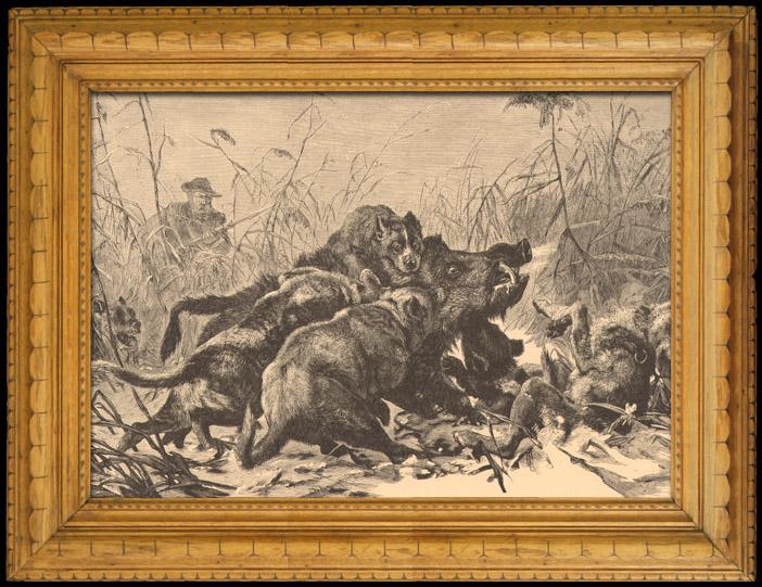 Fishing and Hunting - Wild Boar - Pack - Hunting dog - Gundog