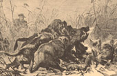 Fishing and Hunting - Wild Boar - Pack - Hunting dog - Gundog