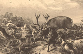 Fishing and Hunting - Coursing - Hunting with Hounds - Hallali - Pack - Hunting dog - Gundog - Deer - Hart - Stag