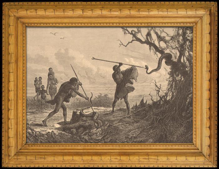 Stampe Antiche & Disegni | Pesca e Caccia - Serpenti in Africa | Incisione xilografica | 1880