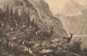 Fishing and Hunting - Deer - Hart - Stags in Scotland