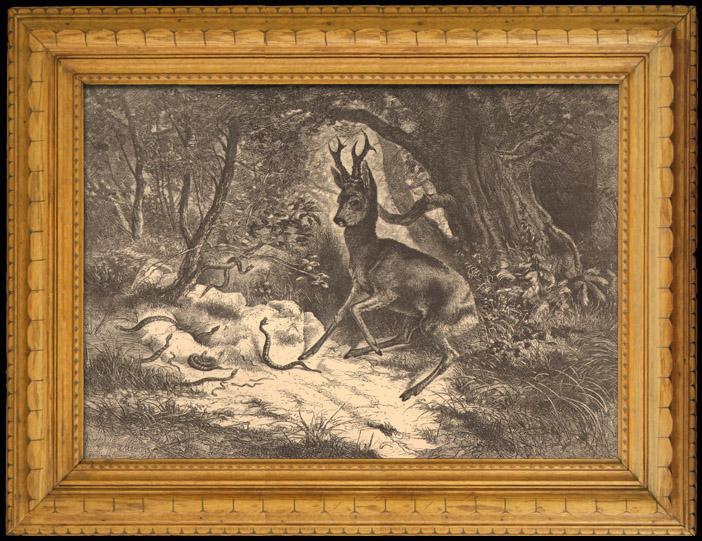 Gravures Anciennes & Dessins | Jeune Cerf Attaqué par des Serpents | Gravure sur bois | 1880