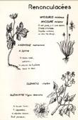 Botany - Botanical - Ranunculaceae - Myosurus - Anemone memorosa - Clematis vitalba