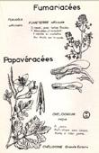 Botany - Botanical - Papaveraceae - Fumariaceae - Chelidonium majus - Fumaria officinalis