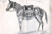 Civil and Military Saddlery - Saddled Horse