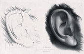 Studie - Ein Ohr (Antoine Maurin)