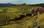 Landscape of Alsace - France - Niedermorschwihr