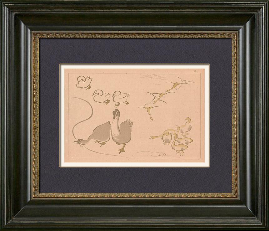 Gravures Anciennes & Dessins | Art Japonais - Esquisse - Oie - Canard (Kitao Massayoshi) | Typogravure | 1889