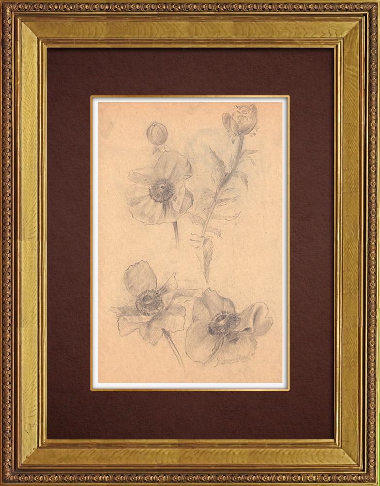 Gravures Anciennes & Dessins | Anémones | Dessin | 1930