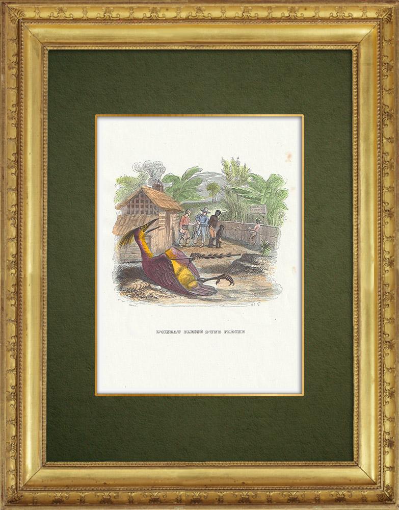 Gravures Anciennes & Dessins   Fables de La Fontaine - L'Oiseau Blessé d'une Flèche   Gravure sur bois   1859