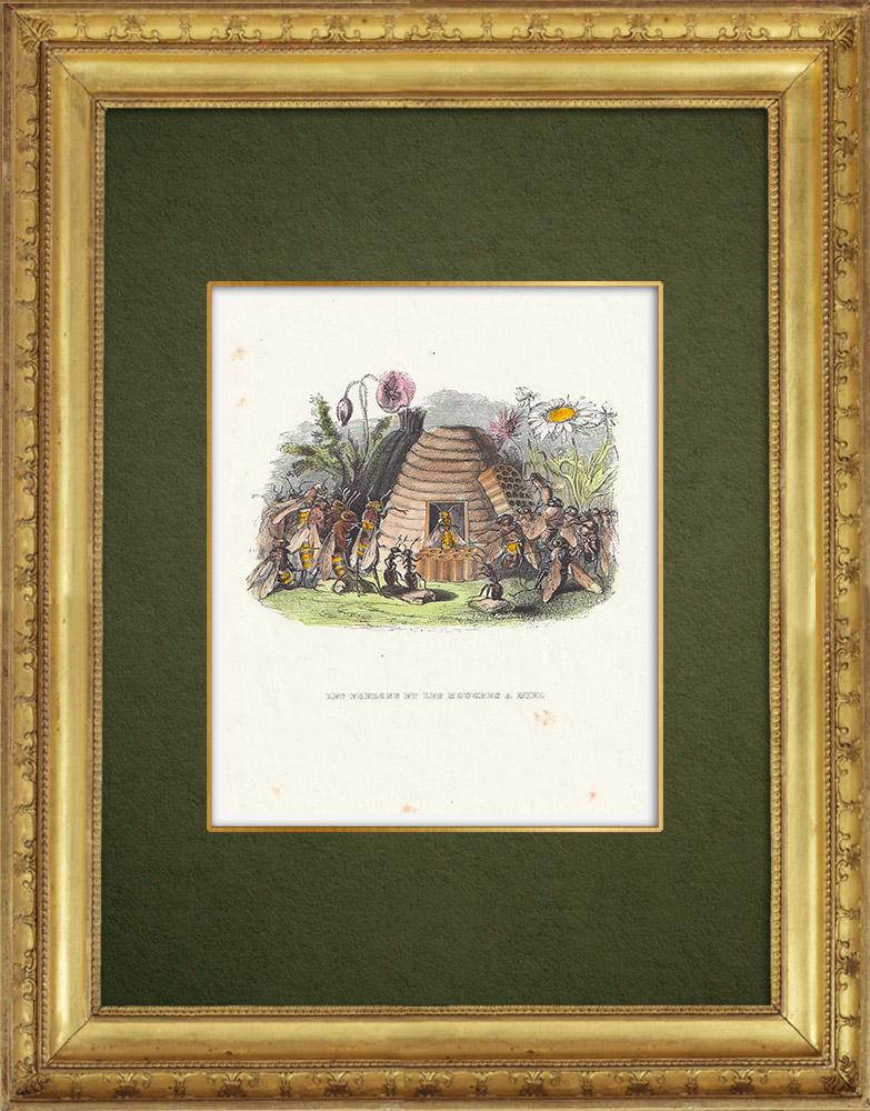 Gravures Anciennes & Dessins   Fables de La Fontaine - Les Frelons et les Mouches à Miel   Gravure sur bois   1859