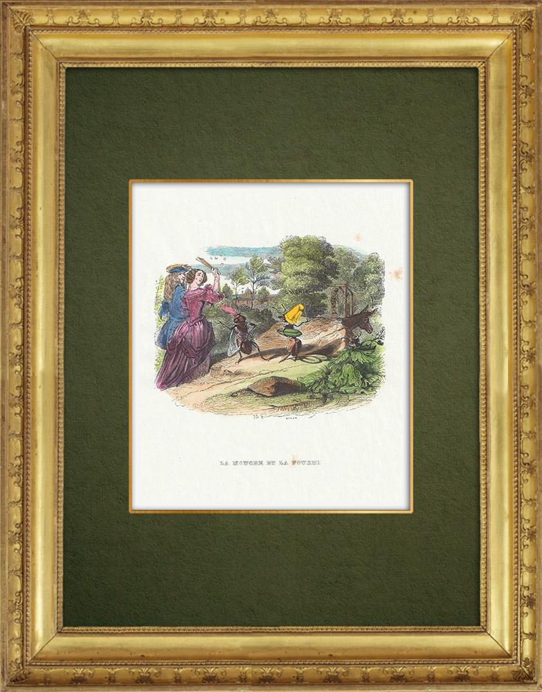 Gravures Anciennes & Dessins   Fables de La Fontaine - La Mouche et la Fourmi   Gravure sur bois   1859