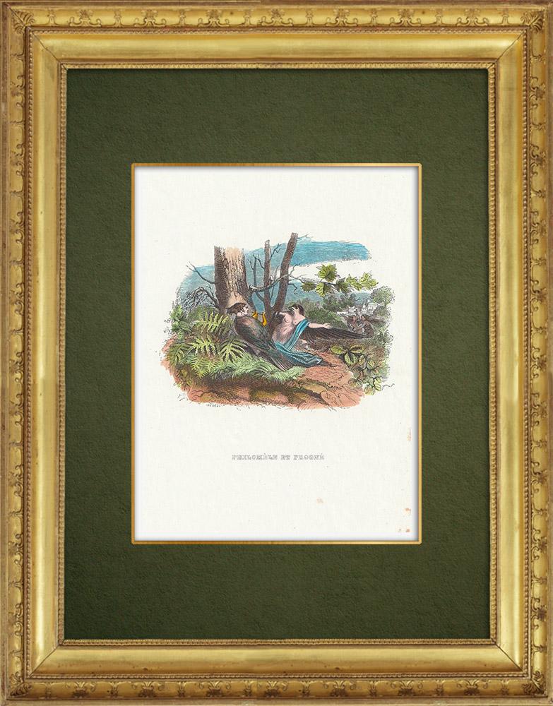 Gravures Anciennes & Dessins | Fables de La Fontaine - Philomèle et Progné | Gravure sur bois | 1859