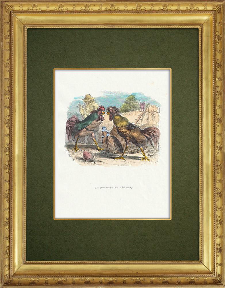 Gravures Anciennes & Dessins | Fables de La Fontaine - La Perdrix et les Coqs | Gravure sur bois | 1859