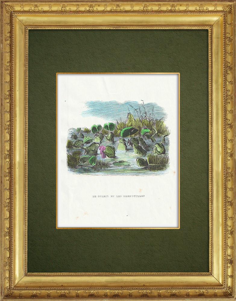 Gravures Anciennes & Dessins | Fables de La Fontaine - Le Soleil et les Grenouilles | Gravure sur bois | 1859