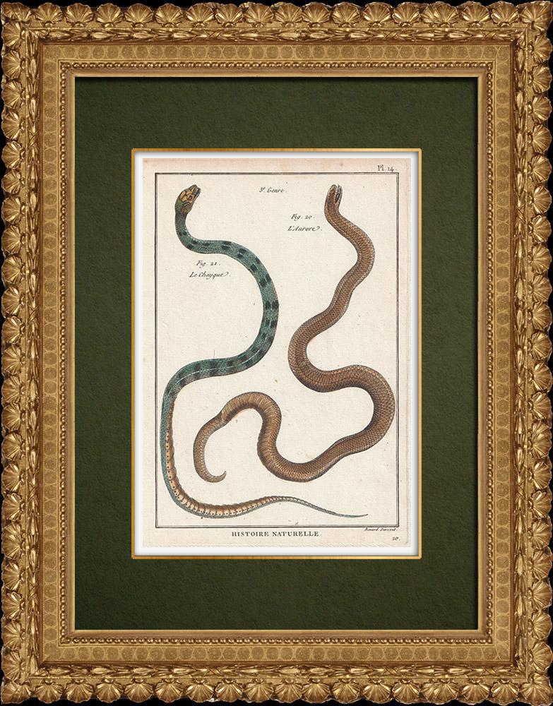 Gravures Anciennes & Dessins | Serpents - Chayque - Aurore | Gravure sur cuivre | 1789