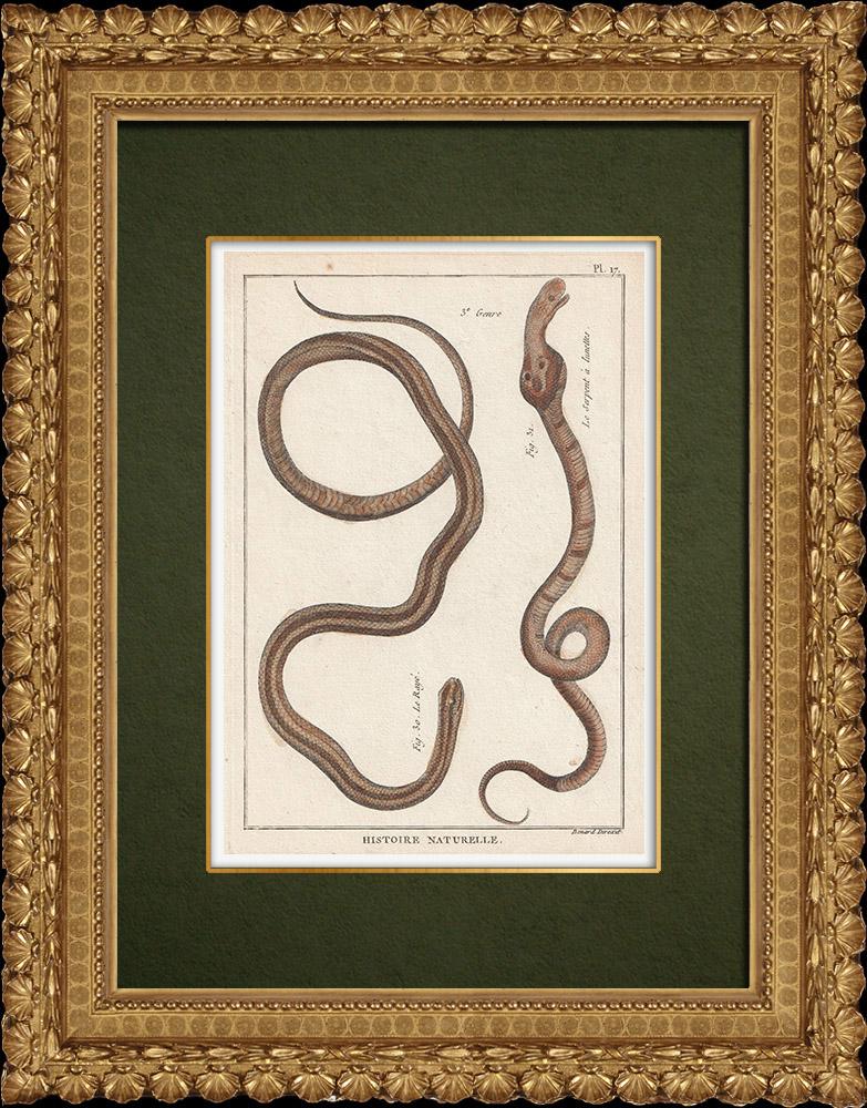 Gravures Anciennes & Dessins | Serpents - Rayé - Serpent à Lunettes | Gravure sur cuivre | 1789