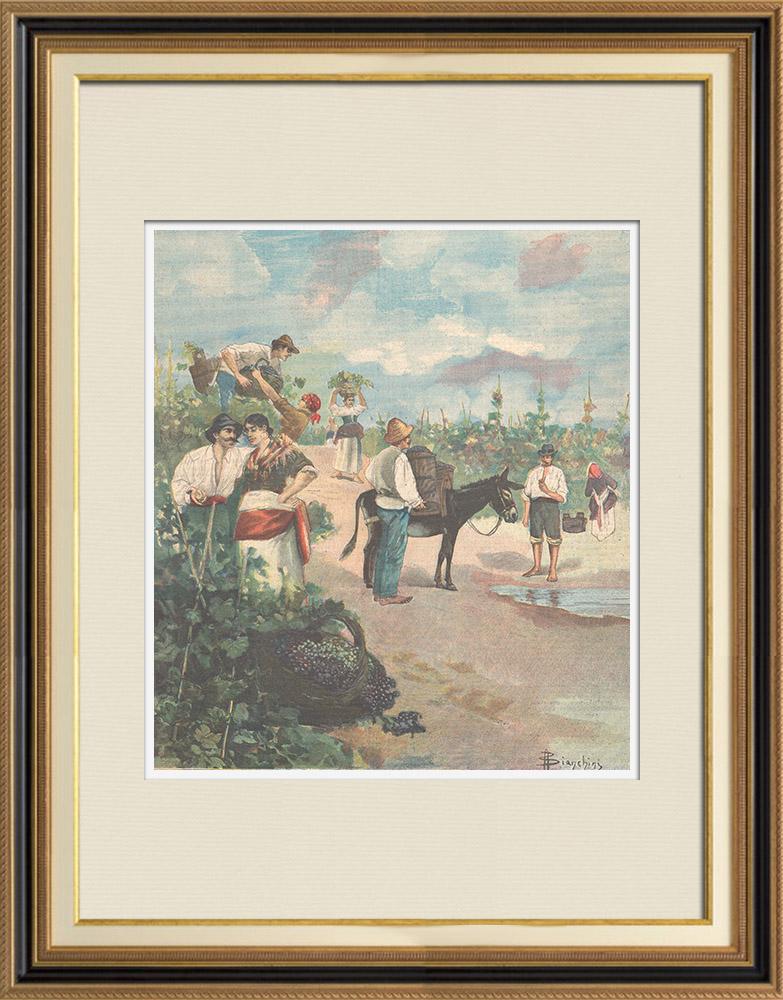 Gravures Anciennes & Dessins | Vendanges en Italie | Gravure sur bois | 1895