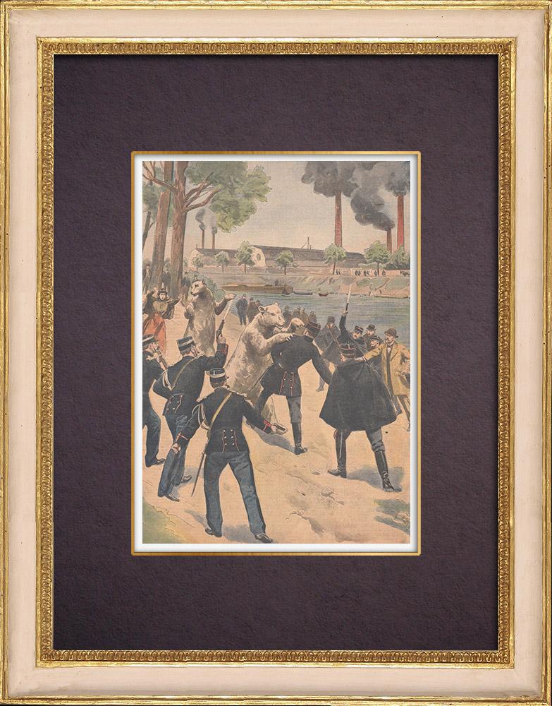 Gravures Anciennes & Dessins | Chasse aux ours dans les rues de Clichy-la-Garenne - Ile de France - 1901 | Gravure sur bois | 1901