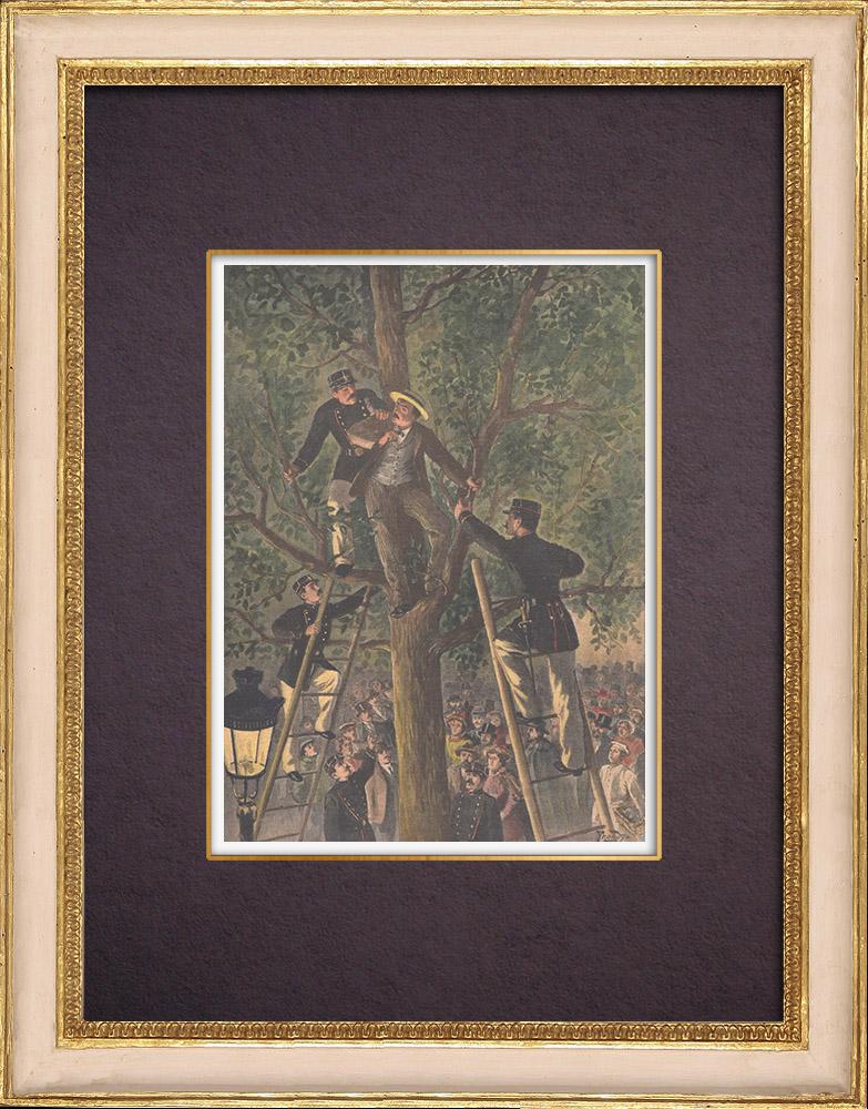 Gravures Anciennes & Dessins | Arrestation d'un voleur dans un arbre à Paris - 1901 | Gravure sur bois | 1901