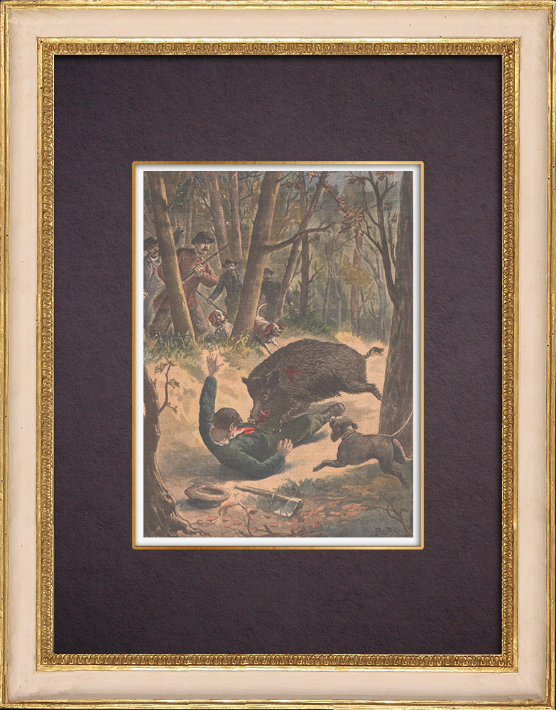 Antique Prints & Drawings | A logger killed by a wild boar - Villers-les-Pots - France - 1901 | Wood engraving | 1901