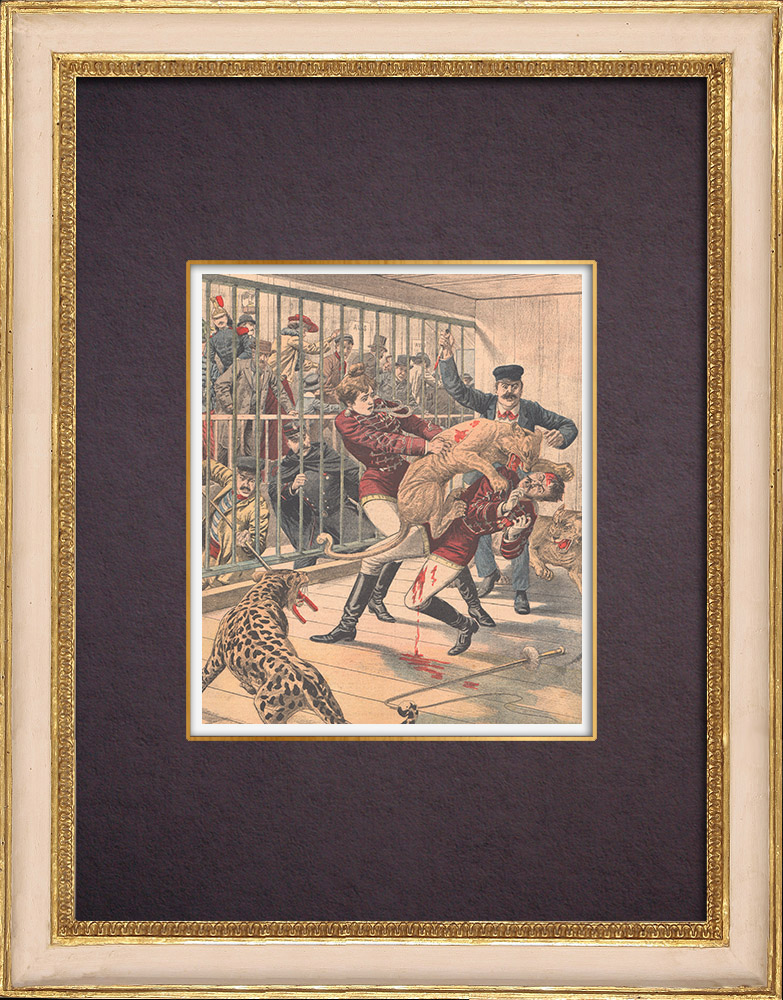 Antique Prints & Drawings | La Goulue and her husband attacked by a cougar in a menagerie - Paris - 1904 | Wood engraving | 1904