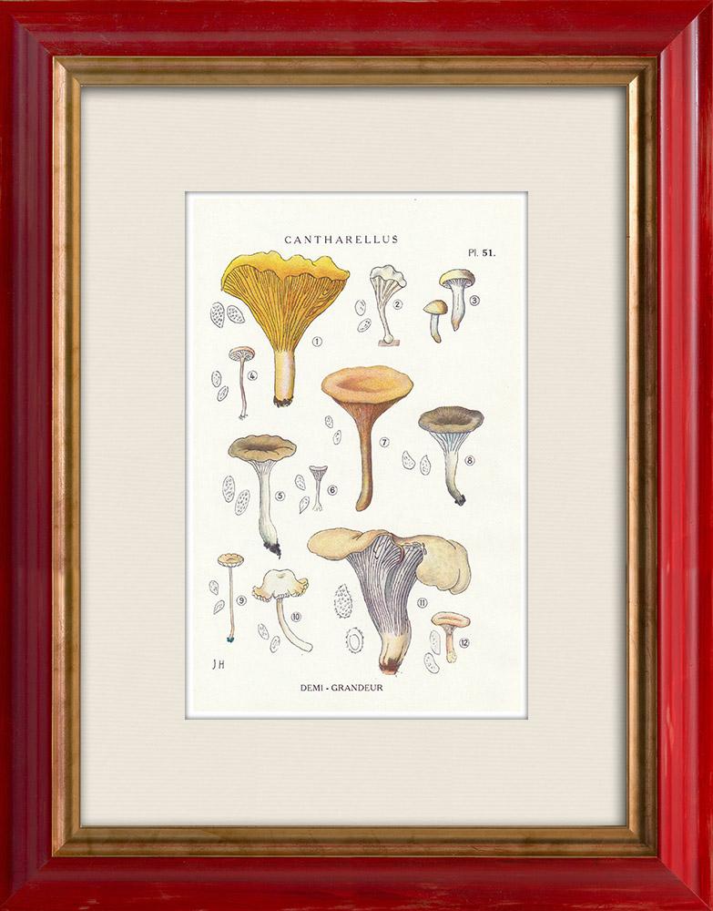 Antique Prints & Drawings | Mycology - Mushroom - Cantharellus Pl.51 | Print | 1919