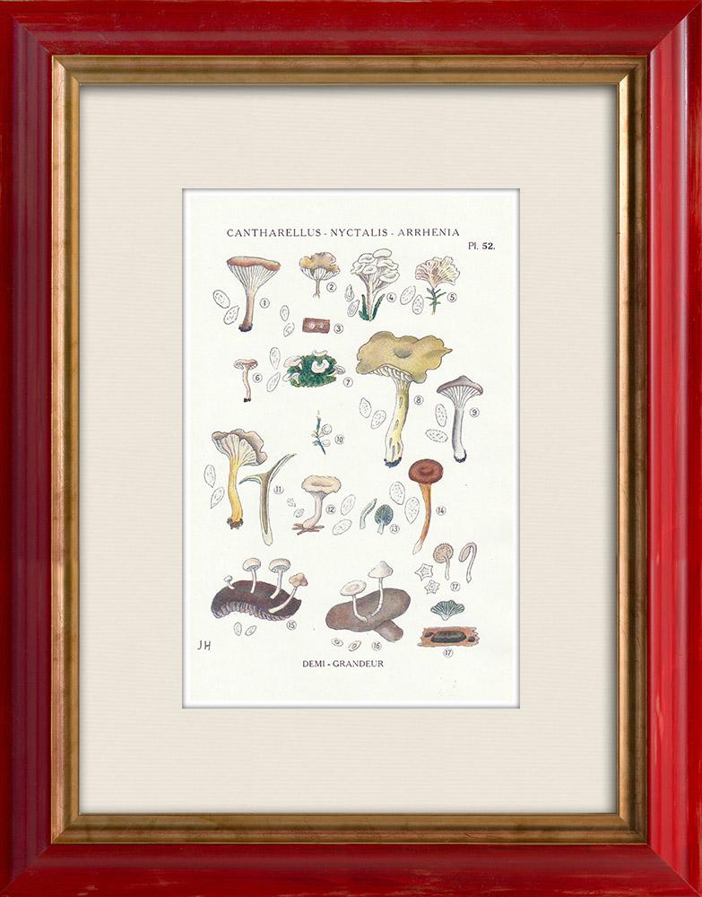 Antique Prints & Drawings | Mycology - Mushroom - Cantharellus - Nyctalis - Arrhenia Pl.52 | Print | 1919
