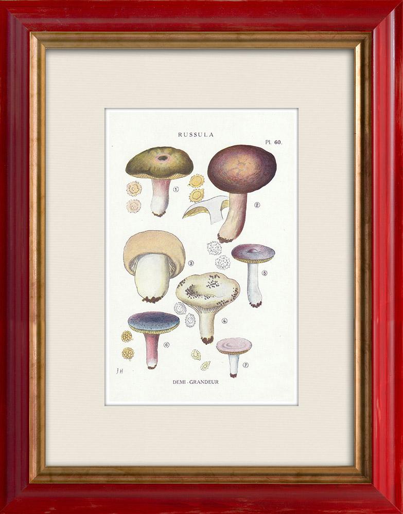Antique Prints & Drawings | Mycology - Mushroom - Russula - Olivacea Pl.60 | Print | 1919