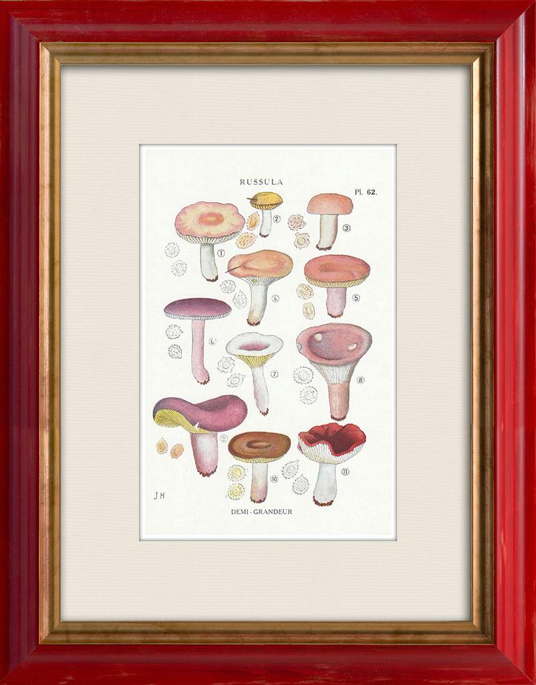 Antique Prints & Drawings | Mycology - Mushroom - Russula - Emetica Pl.62 | Print | 1919