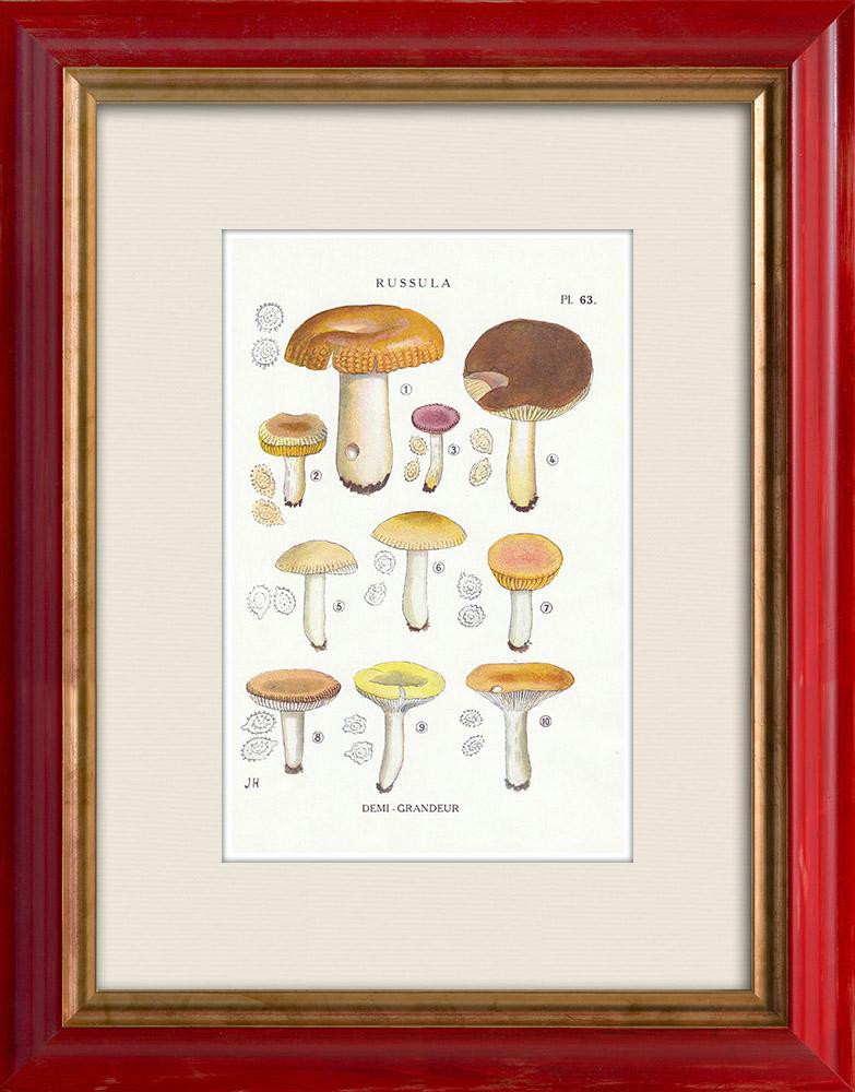 Antique Prints & Drawings   Mycology - Mushroom - Russula - Foetens Pers Pl.63   Print   1919