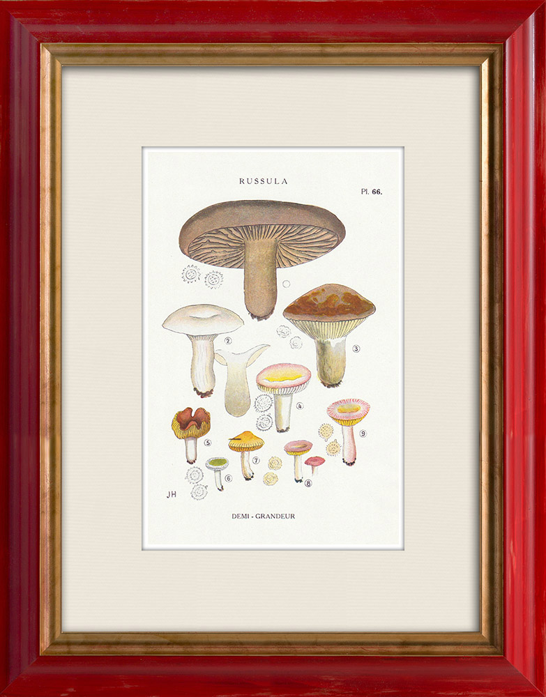 Gravures Anciennes & Dessins | Mycologie - Champignon - Russula - Nigricans Pl.66 | Impression | 1919