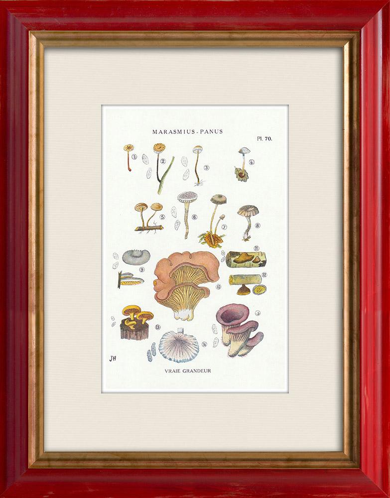 Antique Prints & Drawings | Mycology - Mushroom - Marasmius - Panus Pl.70 | Print | 1919