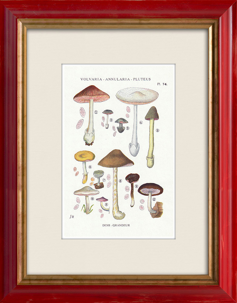 Gravures Anciennes & Dessins | Mycologie - Champignon - Volvaria - Annularia - Pluteus Pl.74 | Impression | 1919
