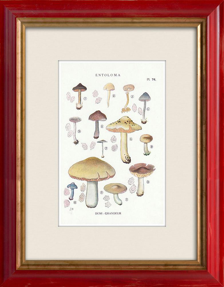 Gravures Anciennes & Dessins | Mycologie - Champignon - Entoloma - Jubatum Pl.76 | Impression | 1919