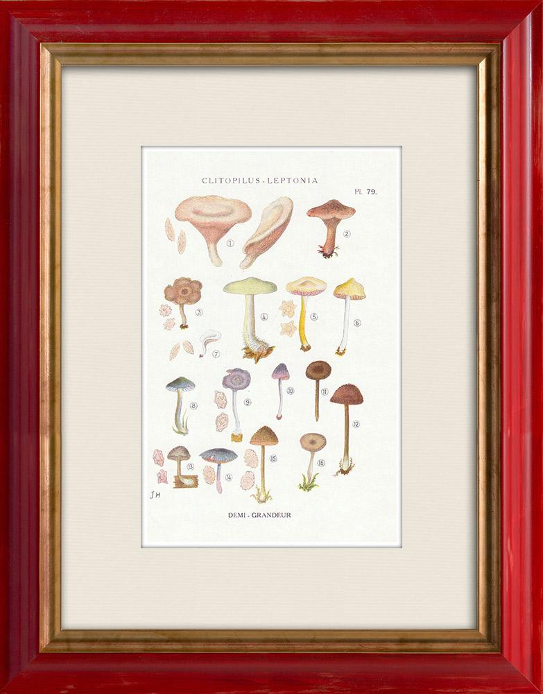 Gravures Anciennes & Dessins | Mycologie - Champignon - Clitopilus - Leptonia Pl.79 | Impression | 1919