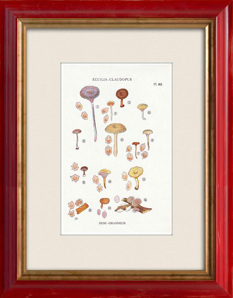 Antique Prints & Drawings   Mycology - Mushroom - Eccilia - Claudopus Pl.82   Print   1919