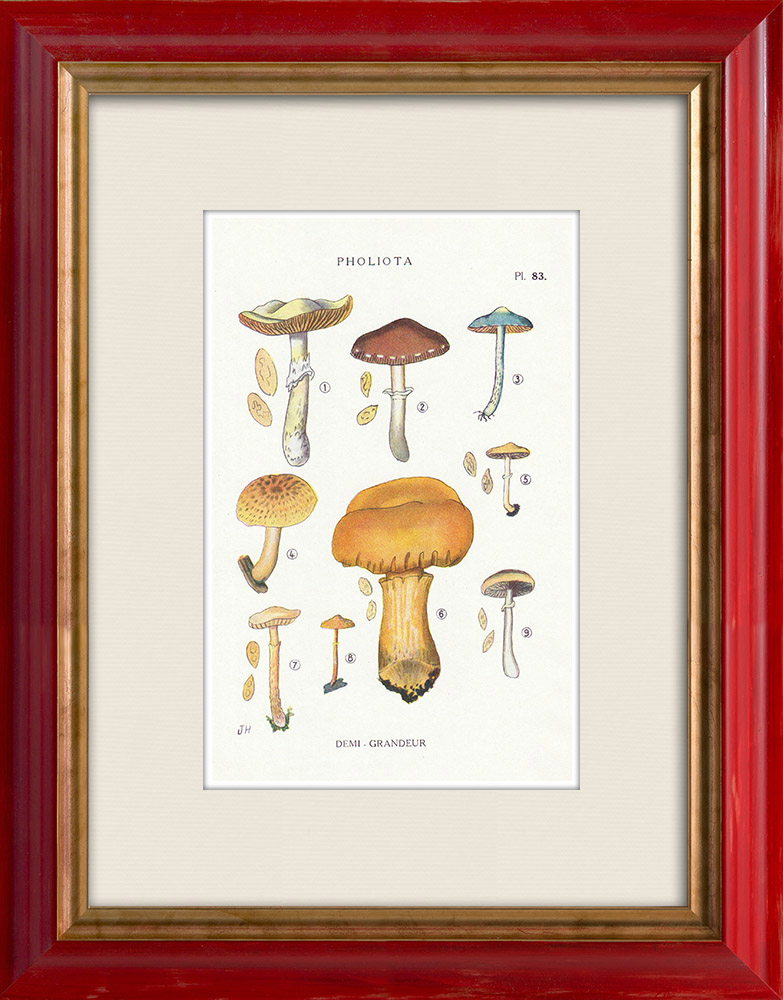 Antique Prints & Drawings | Mycology - Mushroom - Pholiota - Caperata Pers Pl.83 | Print | 1919