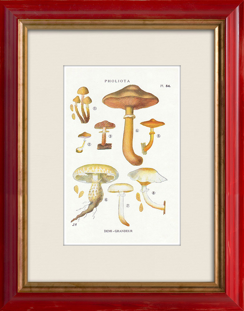 Antique Prints & Drawings | Mycology - Mushroom - Pholiota - Mutabilis PL.84 | Print | 1919