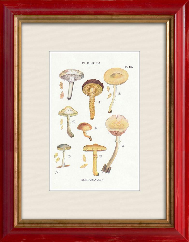 Gravures Anciennes & Dessins | Mycologie - Champignon - Pholiota Pl.87 | Impression | 1919