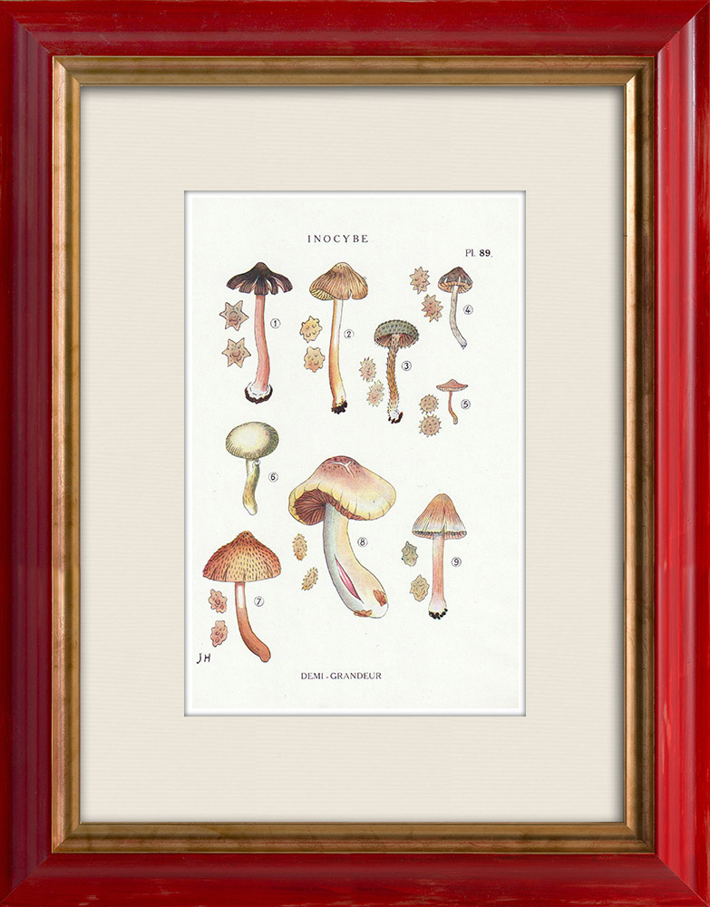 Antique Prints & Drawings   Mycology - Mushroom - Inocybe - Asterospora Q Pl.89   Print   1919