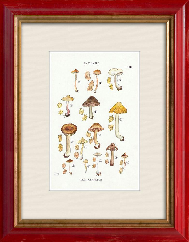 Gravures Anciennes & Dessins | Mycologie - Champignon - Inocybe - Petiginosa Pl.90 | Impression | 1919
