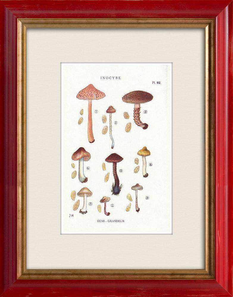 Antique Prints & Drawings | Mycology - Mushroom - Inocybe - Jurana Pat Pl.92 | Print | 1919