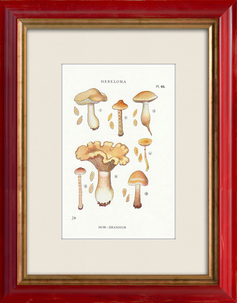 Antique Prints & Drawings | Mycology - Mushroom - Hebeloma - Fastibile Pl.95 | Print | 1919