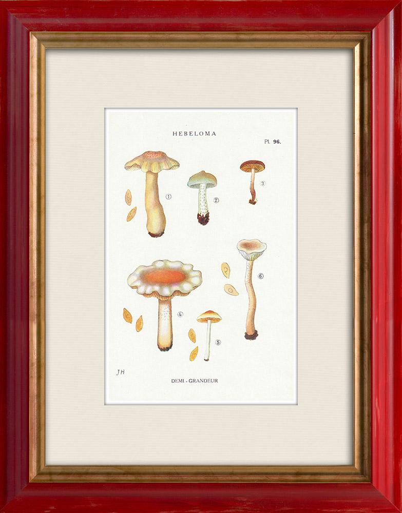 Antique Prints & Drawings | Mycology - Mushroom - Hebeloma - Muscivum Pl.96 | Print | 1919
