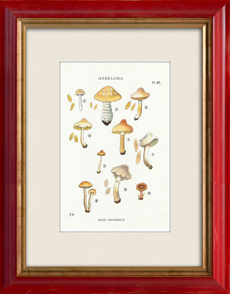 Gravures Anciennes & Dessins | Mycologie - Champignon - Hebeloma - Circinans Pl.97 | Impression | 1919