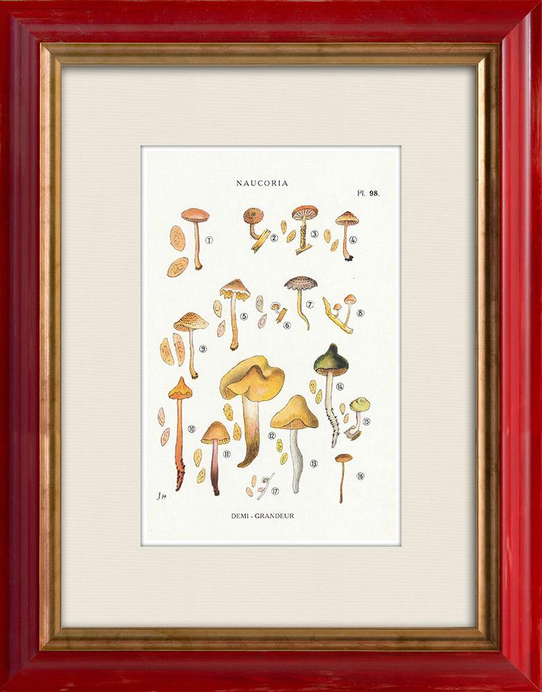 Gravures Anciennes & Dessins | Mycologie - Champignon - Naucoria - Semiorbicularis Pl.98 | Impression | 1919