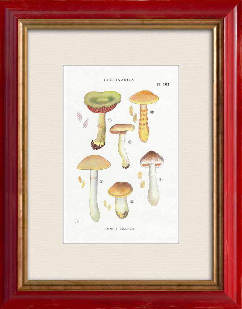 Antique Prints & Drawings | Mycology - Mushroom - Cortinarius Pl.103 | Print | 1919